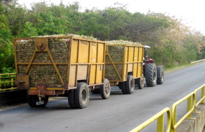 barbados-sugar-wagon.jpg