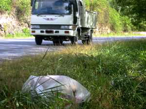 "Typical roadside wildlife: The not so rare Genus ""plasticus baggis trashisus"""