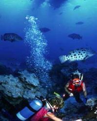 barbados-snorkeling-coral-reef.jpg