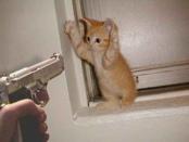 barbados-cat-burglar.jpg