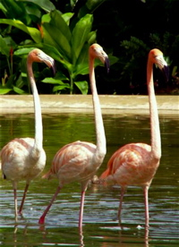 Graeme Hall Flamingos Networking on FaceBook! ;-)