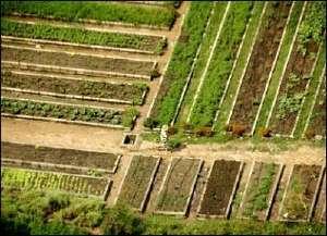 caracas-urban-garden-barbados.jpg