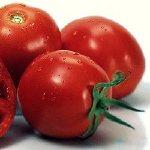 tomatos-barbados.jpg