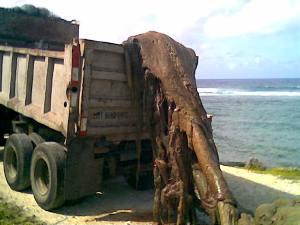 barbados-dead-whale-beach.jpg