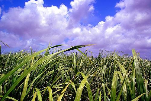 barbados-cane-ethanol.jpg