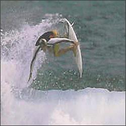 zed-surfing-barbados.jpg