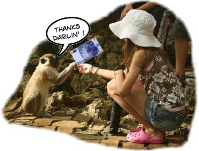 The Monkey Knows What Tourism Is All About!