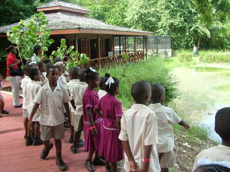 School Children Learning At The Last Mangrove Wetlands On The Island - The Graeme Hall Nature Sanctuary