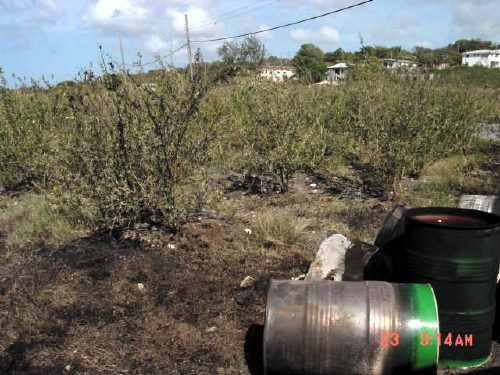 "So-Called ""Clean-Up"" By Shell Oil In Barbados"
