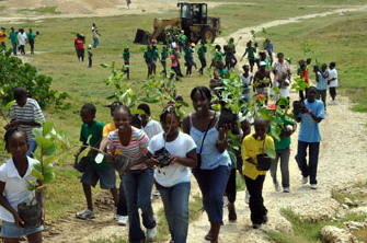 Barbados 4H Trees