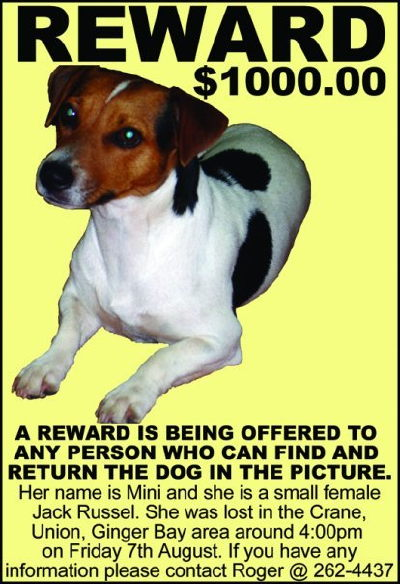 barbados lost dog