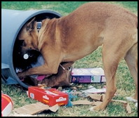 Dog eats garbage