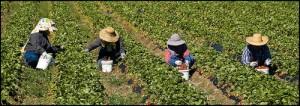 barbados canada farm workers