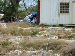Harlequin Merricks Barbados 2