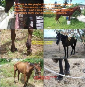 Barbados Race Horses