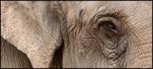 Trinidad Elephant Room