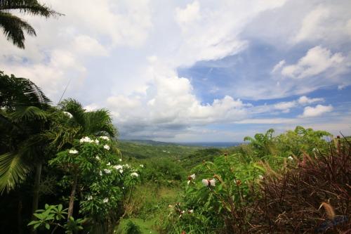Barbados Hills View